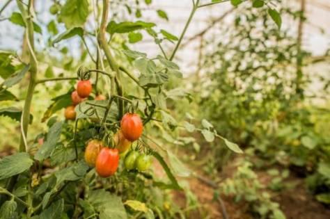 filme-sobre-mst-e-agroecologia-ganha-premio-da-onu-lt2-7863-agroflorestas-contestado-18-01-2018-foto-leandro-taques-696x463.jpg